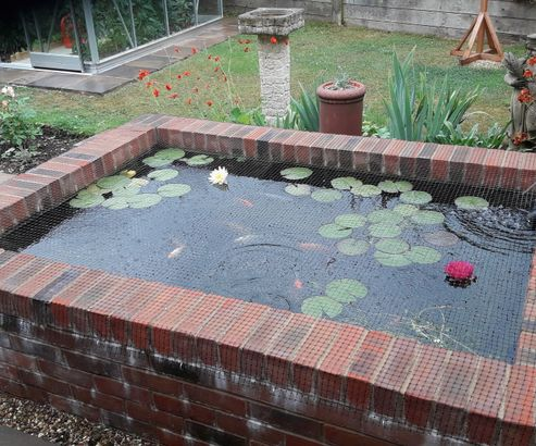 My Pond Now
